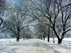 Fatimas Jullista: Bra att veta & Tips på saker att göra om du inte firar